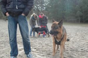 hondenclub wandeling 10-1-16 (105)