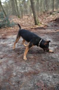 hondenclub wandeling 10-1-16 (135)