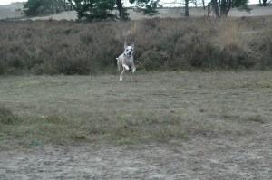 hondenclub wandeling 10-1-16 (149)
