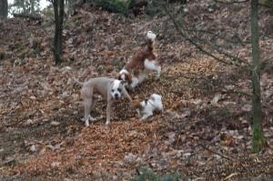 hondenclub wandeling 10-1-16 (60)