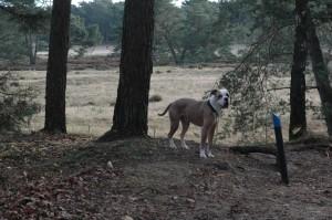 hondenclub wandeling 10-1-16 (63)