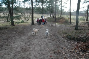 hondenclub wandeling 10-1-16 (66)