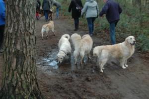 hondenclub wandeling 10-1-16 (80)