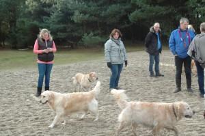 hondenclub wandeling 10-1-16 (98)